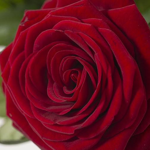 Bouquet de fleurs So chic