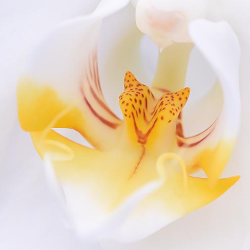 Bouquet de fleurs Orchidée câline