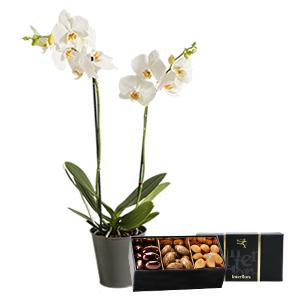 Bouquet de fleurs Orchidée gourmande Collection Homme Gourmand