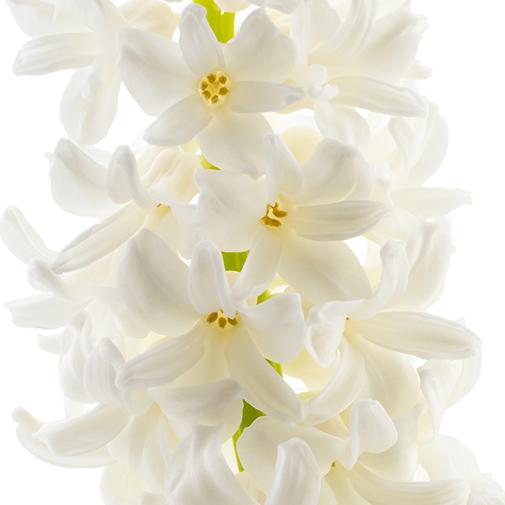 Composition florale Douce nuit