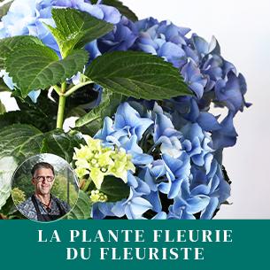 Bouquet de fleurs Plante fleurie du fleuriste Fête des Mères