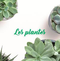 Nos plantes