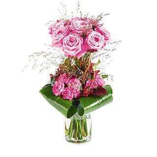 Audace rose