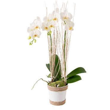 Plantes vertes et fleuries Lilou Livraison 90 minutes
