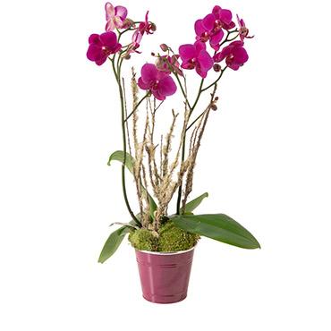 Plantes vertes et fleuries Lola Livraison 90 minutes