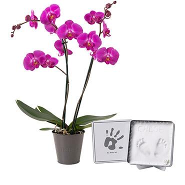 Fleurs et cadeaux Bébé artiste Baby Art Naissance