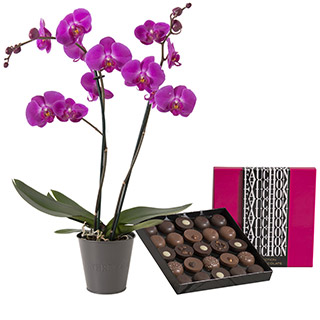 Orchidée et son écrin géant FAUCHON