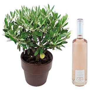 "Olivier & son rosé ""Les Terrasses du Perret"""