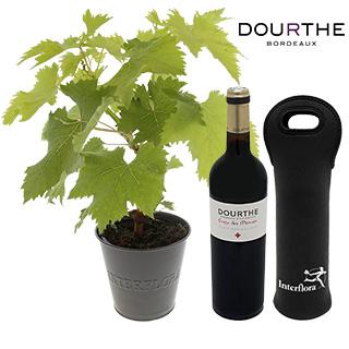 Pied de vigne & son St Emilion Dourthe