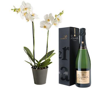 Orchidée pétillante
