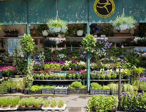 fleuriste condat sur vezere livraison de fleurs condat sur vezere 24. Black Bedroom Furniture Sets. Home Design Ideas