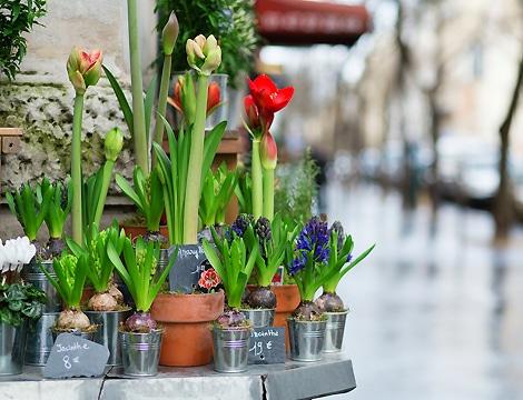 df0b6ebd1549 Fleuriste Orveau Bellesauve - Livraison de fleurs Orveau Bellesauve (45)
